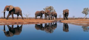 A&K African Trips for CTCVoyages