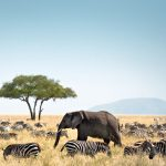 African Travel Vacations